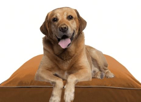 ドギボーに乗る犬