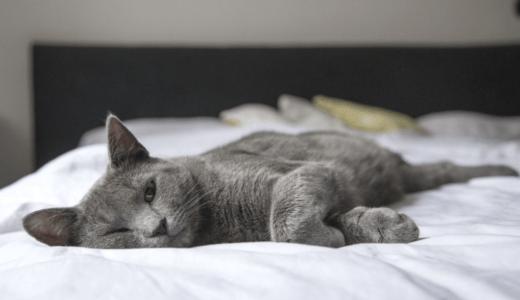 ベッドに寝転ぶ猫