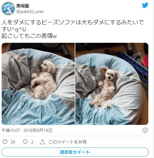 ビーズクッションに寝転ぶ犬