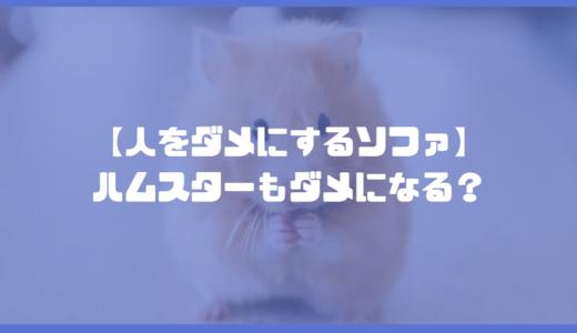 【人をダメにするソファ】ハムスターも寛げるおすすめビーズソファを紹介!